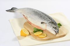 Fresh raw salmon. With lemons and mint Royalty Free Stock Image