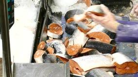 Fresh raw salmon on counter stock video footage