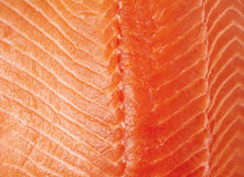 Fresh raw salmon fillet background. Fresh raw salmon fillet texture, close up Stock Photography