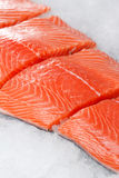 Fresh raw salmon fillet. On ice Royalty Free Stock Photos