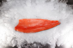 Fresh raw salmon fillet. On ice Stock Photography