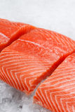 Fresh raw salmon fillet on ice. Fresh raw red salmon fillet on ice Royalty Free Stock Images