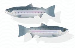 Fresh raw salmon fish isolated on white background. Vector , illustration vector illustration