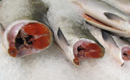 Fresh Raw Salmon on Ice. Fresh cleaned salmon at the seafood market Royalty Free Stock Photo