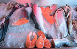 Fresh raw salmon on ice counter. Bergen fish market, Norway. Big pieces raw salmon, fish on ice Royalty Free Stock Photos