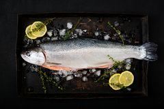Fresh raw salmon red fish with ice on a dark background. Flat lay. Top view Stock Image