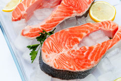 Fresh Raw Salmon Red Fish Steak. Isolated on ice Stock Images