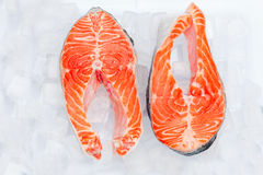 Fresh Raw Salmon Red Fish Steak. Isolated on ice Royalty Free Stock Images