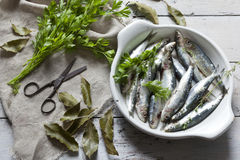 Fresh raw sardines on dish with parsley and bay leaves on rustic background with jute canvas and vintage scissor wooden table Royalty Free Stock Photo