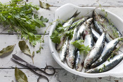 Fresh raw sardines on dish with parsley, bay leaves and thyme on rustic background with vintage scissor white wooden table Royalty Free Stock Images