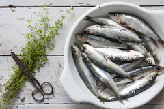 Fresh raw sardines on dish with thyme sprigs on rustic background with vintage rust scissor Stock Photo