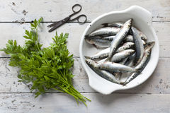 Fresh raw sardines on enamelled tray withparsley bouquet on rustic background with rust vintage scissor Stock Photography