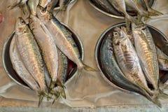 Fresh raw sardines. At the market in Hong-Kong Royalty Free Stock Photo