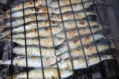 Fresh raw Sardines prepared on the charcoal Grill. Portugal Royalty Free Stock Photography