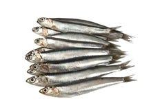 Fresh raw sardines Stock Photography