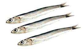 Fresh raw sardines Stock Photos