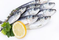 Fresh raw sardines Royalty Free Stock Photos
