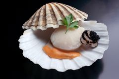 Fres raw scallop with black truffle stock photo