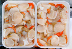 Fresh raw scallops Stock Photo