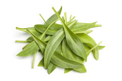 Fresh raw sea aster leaves. On white background Royalty Free Stock Photography