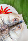 Fresh raw sea bass with chili on plate Royalty Free Stock Image