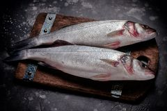 Fresh raw sea bass fish on wooden cutting board. Cooking concept on a dark background Royalty Free Stock Photography