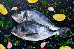 Fresh Raw Sea Bream Fish on blue stone background. With vegetables and herbs Royalty Free Stock Photo