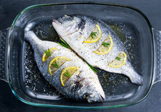 Fresh Raw Sea Bream Fish with herbs. ready to cook. In oven. background Stock Photography