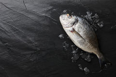 Fresh raw sea bream fish at the rock. Fresh dorado or gilthead bream on black stone background with ice Royalty Free Stock Photography
