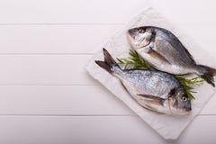 Raw sea bream fish Royalty Free Stock Photography