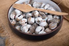 Fresh raw sea cockles clams. Food use for cook steamed blanched cockles clams Stock Photos