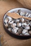 Fresh raw sea cockles clams. Food use for cook steamed blanched cockles clams Stock Photography