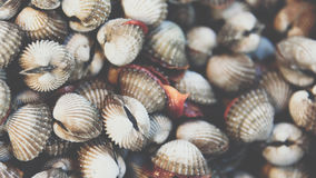 Fresh raw sea cockles clams at seafood market Stock Photos