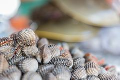 Fresh raw sea cockles clams at seafood market. Fresh raw sea cockles clams display for sale at seafood market or Thai street food use for cook steamed blanched Royalty Free Stock Image
