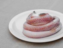 Fresh raw sea eel Stock Images
