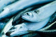Fresh raw sea fish. Close up of fresh raw sea fish Royalty Free Stock Photography