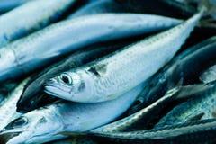 Fresh raw sea fish. Close up of fresh raw sea fish Royalty Free Stock Photos
