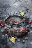 Fresh raw sea fish on ice cubes with slices of lime and lemon and chili peppers on grey Royalty Free Stock Images