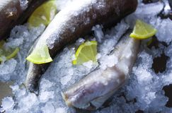 Fresh raw sea fish and lemon on ice surface. Fresh raw sea fish and lemon peaces on ice surface Stock Photography