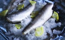 Fresh raw sea fish and lemon on ice surface. Fresh raw sea fish and lemon peces on ice surface Royalty Free Stock Image