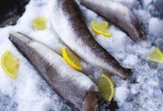 Fresh raw sea fish and lemon on ice surface. Fresh raw sea fish and lemon peaces on ice surface Royalty Free Stock Photography