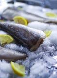 Fresh raw sea fish and lemon on ice surface. Fresh raw sea fish and lemon peaces on ice surface Stock Photography