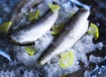Fresh raw sea fish and lemon on ice surface. Fresh raw sea fish and lemon peces on ice surface Stock Photos