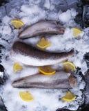 Fresh raw sea fish and lemon on ice surface. Fresh raw sea fish and lemon peces on ice surface Stock Photography
