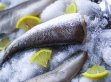 Fresh raw sea fish and lemon on ice surface. Fresh raw sea fish and lemon peaces on ice surface Stock Photo
