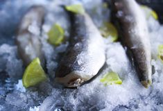 Fresh raw sea fish and lemon on ice surface. Fresh raw sea fish and lemon peaces on ice surface Royalty Free Stock Photography