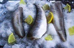 Fresh raw sea fish and lemon slices on ice surface. Fresh raw sea fish and lemon peaces on ice surface Stock Image