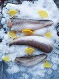 Fresh raw sea fish and lemon on ice surface. Fresh raw sea fish and lemon peces on ice surface Royalty Free Stock Photos