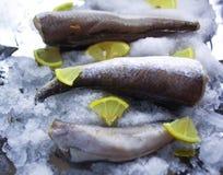Fresh raw sea fish and lemon slices on ice surface. Fresh raw sea fish and lemon peaces on ice surface Stock Images