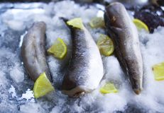 Fresh raw sea fish and lemon slices on ice surface. Fresh raw sea fish and lemon peaces on ice surface Stock Images